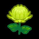 Image of Green mums