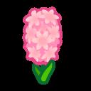 Image of Pink hyacinths