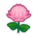 Image of Pink mums
